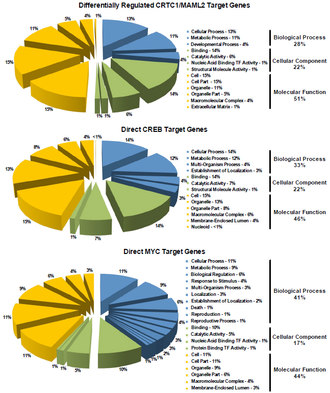 Gene Ontology (GO) classification and gene expression analysis of CRCT1/MAML2- regulated genes in Dox-inducible HEK293-CMV (TetR)TetO (C1/M2) cells relative to curated ChIP-Chip lists of direct CREB- or MYC related genes. Pie charts of GO categories  (Biological Processes, Cellular Component and Molecular Function) generated from RNA-seq data on 4,741 total differentially expressed C1/M2 target genes from Dox-induced cells are shown relative to 2,449 total direct CREB and 1,028 total direct MYC target genes.  Conkright et al 2014.