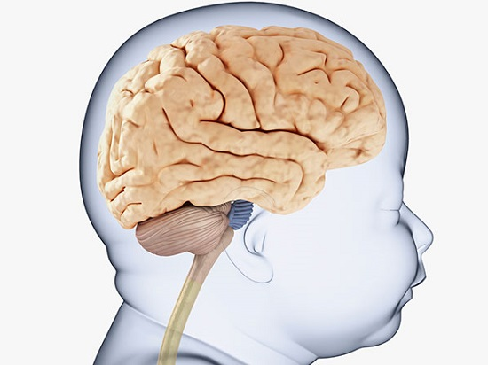 My Baby's Brain and me! - Learn More About Your Infant ...