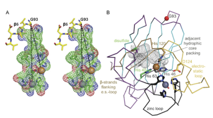 Chemists show that ALS is a protein aggregation disease - neuroinnovations