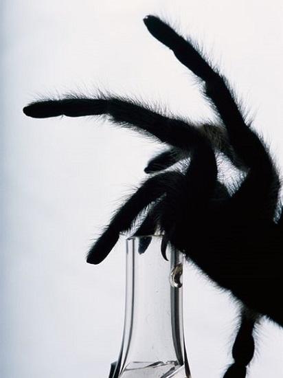 Tarantula venom illuminates electrical activity in live cells - neuroinnovations