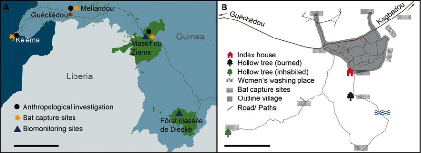 Sampling and investigation locations.  In southeastern Guinea (Sierra Leone, Guinea, and Liberia are visible); scale bar stands for 50 km.  In and around the index village, Meliandou; scale bar stands for 100 m.  Investigating the zoonotic origin of the West African Ebola epidemic.  Leendertz et al 2014.