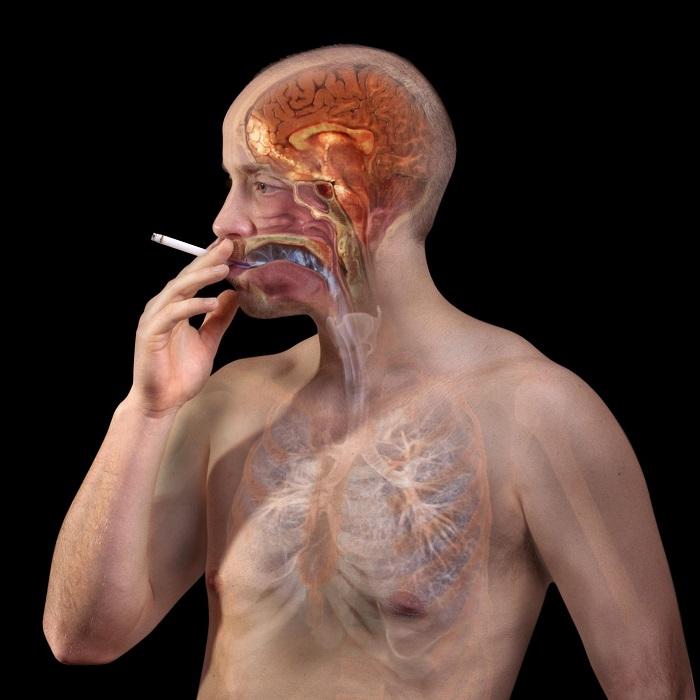 Image Result For Symptoms You Should