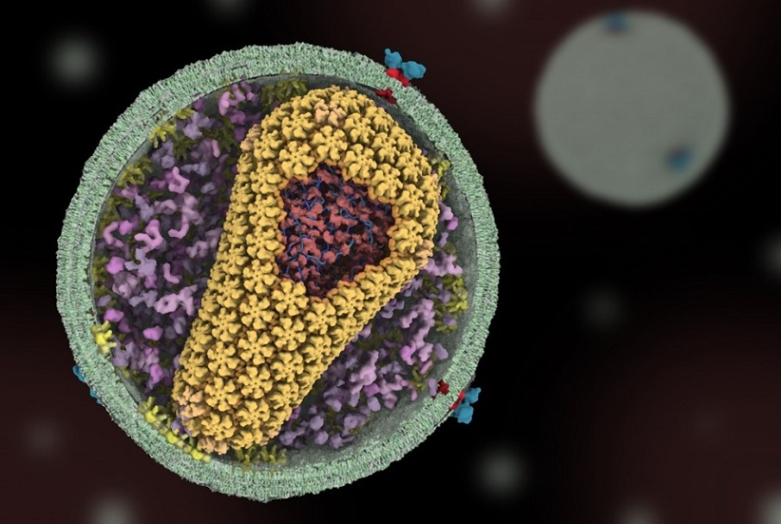 Science of HIV.  This is a large-scale project, funded by NIH, to create an animation showing the full life cycle of HIV in molecular detail.   © 1 μm illustration All Right Reserved