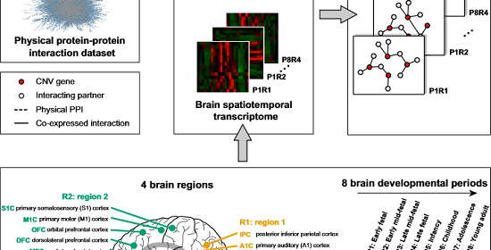 Study Links Autism To Epigenetic >> Researchers Map Epigenetic Autism Pathway During Neurodevelopment