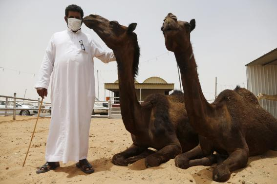 A man wearing a mask poses with camels at a camel market in the village of al-Thamama near Riyadh