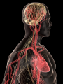 featured image Scientists look to heart disease and strokes for clues to treating Alzheimer's - neuroinnovations