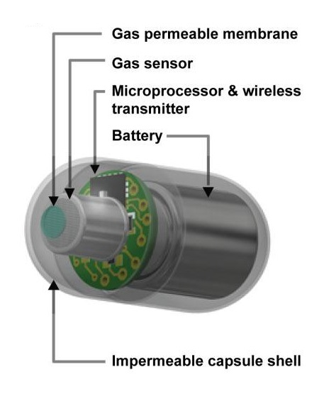 This is a schematic of a swallowable gas capsule.  Human intestinal gas measurement systems: in vitro fermentation and gas capsules.  Credit:  Nam Ha.