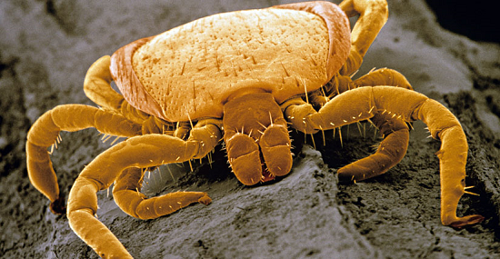 featured image Researchers discover never-before-seen tick-borne disease - healthinnovations