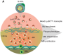featured image Targeting dangerous inflammation inside artery plaque - healthinnovations