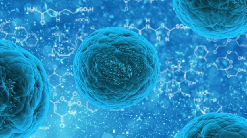 New transitional stem cells discovered - healthinnovations