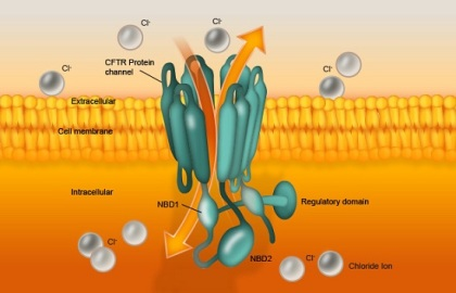 featured image Key component in protein that causes cystic fibrosis identified - healthinnovations