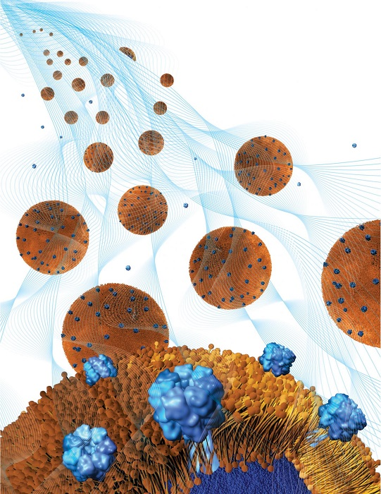Toxin-absorbing nanoparticles are loaded into a holding gel to make a nanosponge-hydrogel, which can potentially treat local bacterial infections.  Credit:  Weiwei Gao/Jacobs School of Engineering/UC San Diego.
