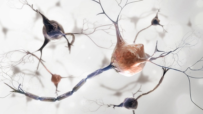 Study implicates new gene in multiple sclerosis disease activity - neuroinnovations