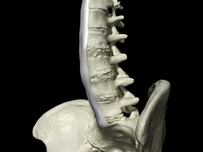 Diagnosing Ankylosing Spondylitis, Bamboo spine. Credit:  3D Medical Education v3.0.