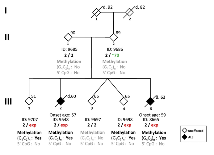 Pedigree of Family PED25 Individual ID and C9orf72 genotype are shown beneath the corresponding diamond. Arabic numbers indicate the repeat number, and ''exp'' represents the expansion allele. The age at time of examination is shown in the upper right corner. The age of death is indicated by a prefix of ''d.'' The age of onset is  indicated  for  individuals  with  disease above the ID number. For protecting confidentiality, the gender of family members is masked. The results of methylation analyses for the 5' CpG island and for (G4C2)n methylation  are  shown  beneath  the C9orf72 genotype. ''Yes'' represents the presence of methylation, and ''no'' represents the absence of methylation.  Jump from Pre-mutation to Pathologic Expansion in C9orf72.   Xi et al 2015.