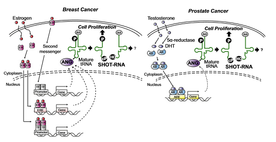 ft New family of small RNAs boosts cell proliferation in cancer - healthinnovations