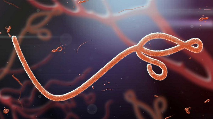 Researchers develop aerosolized vaccine that protects primates against Ebola - healthinnovations