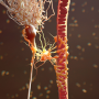 ft Target healthy cells to stop brain cancer hijack UBC study - neuroinnovations