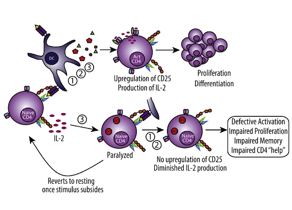 "Primary T cell activation involves the integration of three distinct signals delivered in sequence: (1) antigen recognition, (2) costimulation, and (3) cytokine-mediated differentiation and expansion. Strong immunostimulatory events such as immunotherapy or infection induce profound cytokine release causing ""bystander"" T cell activation, thereby increasing the potential for autoreactivity and need for control. We show that during strong stimulation, a profound suppression of primary CD4+ T-cell-mediated immune responses ensued and was observed across preclinical models and patients undergoing high-dose interleukin-2 (IL-2) therapy. This suppression targeted naive CD4+ but not CD8+ T cells and was mediated through transient suppressor of cytokine signaling-3 (SOCS3) inhibition of the STAT5b transcription factor signaling pathway. These events resulted in complete paralysis of primary CD4+ T cell activation, affecting memory generation and induction of autoimmunity as well as impaired viral clearance. These data highlight the critical regulation of naive CD4+ T cells during inflammatory conditions. Out-of-Sequence Signal 3 Paralyzes Primary CD4+ T-Cell-Dependent Immunity. Murphy et al 2015."