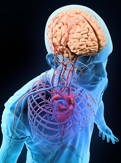 can fever cause brain damage adults