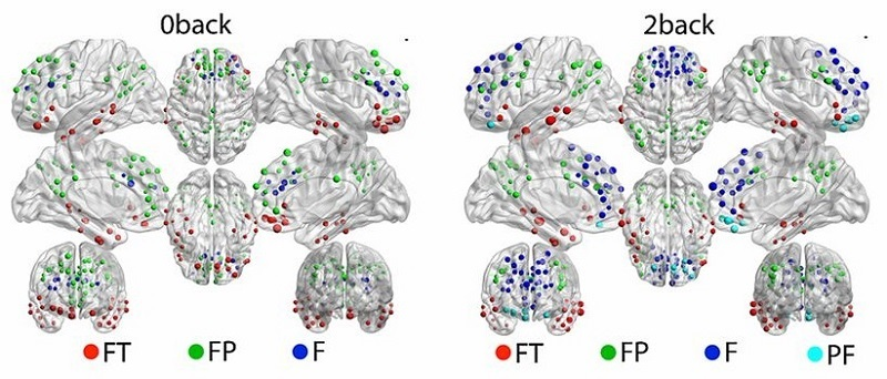 Evolving network organization. A mapping of the frontal modules obtained in B to their brain coordinates for the 0-back (Left) and 2-back condition (Right); labels are as in C. Dynamic reconfiguration of frontal brain networks during executive cognition in humans. Bassett et al 2015.