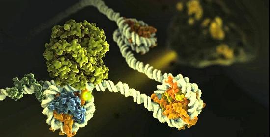 Study Links Autism To Epigenetic >> Study Identifies Epigenetic Regulators Linked To Autism Like