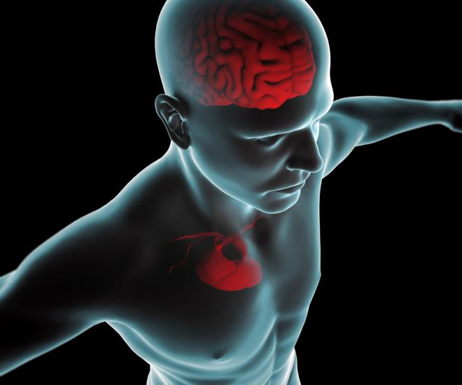 Researchers find link between early-stage brain and heart disease - neuroinnovations