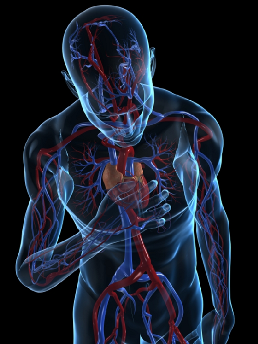 TGen and Barrow identify genes linked to stress-triggered heart disease - healthinnovations