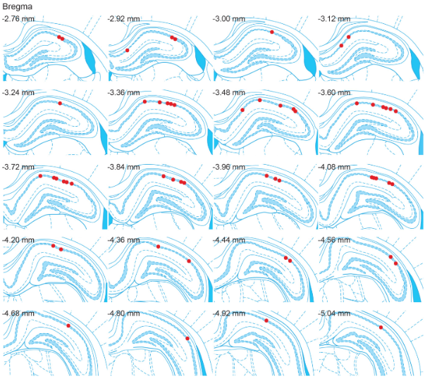 Schematic showing location of all 56 recording sites in this study (red dots). Spatial Sequence Coding Differs during Slow and Fast Gamma Rhythms in the Hippocampus. Colgin et al 2015.