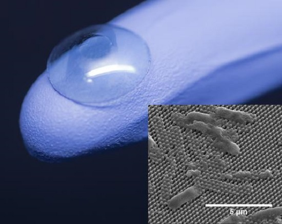 The center of an artificial cornea (on glove) is coated with tiny pillars that impale and kill bacterial cells (inset). Credit: Jonathan Pegan and Mary Nora Dickson.