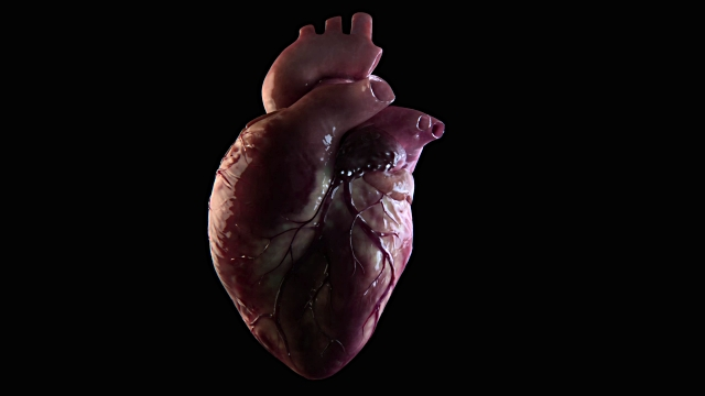 3d render of human heart beat.  © copyright 1999-2016 Getty Images.