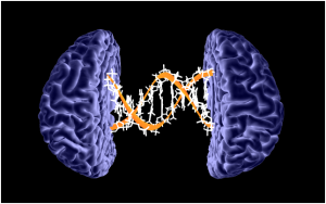 Genetic risk factors for Alzheimer's disease may be detectable even in young adults - neuroinnovations