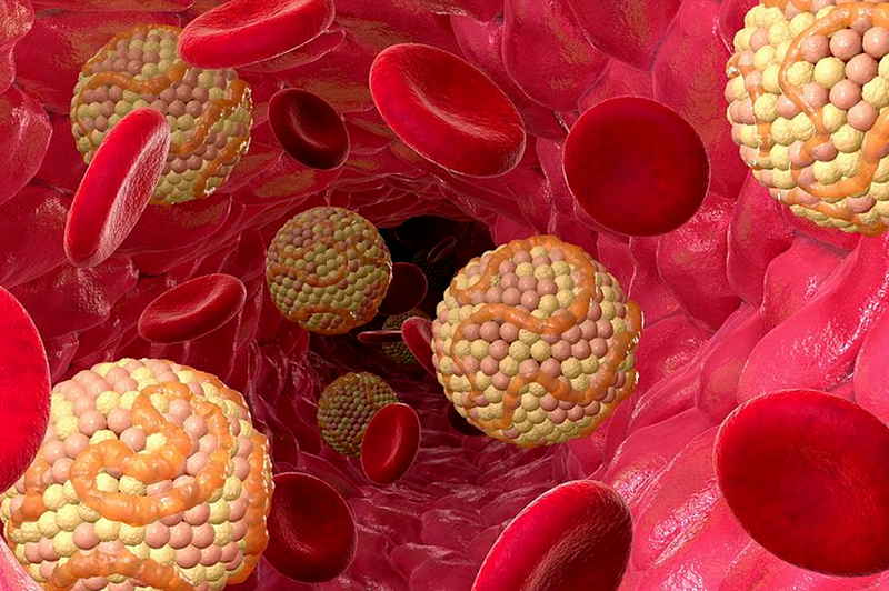 Studies in humans and animals show link between GALNT2 gene and levels of HDL cholesterol - healthinnovations
