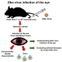 ft-evidence-of-zika-virus-found-in-tears-healthinnovations