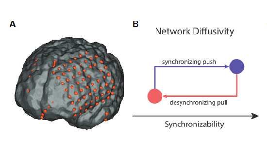 ft-penn-research-identifies-brain-network-that-controls-spread-of-seizures-neuroinnovations