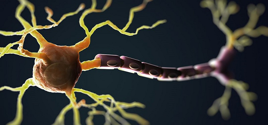 ft-scientists-identify-spark-plug-that-ignites-nerve-cell-demise-in-als-neuroinnovations