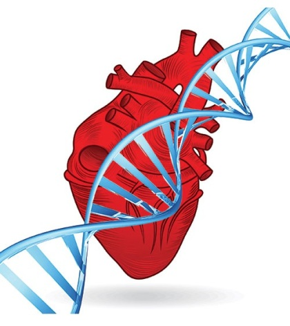 heart-attacks-may-cause-genetic-changes-healthinnovations