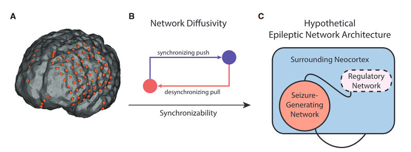 Hypothesized Mechanism of Seizure Regulation.  (A) We created functional networks from intracranial electrophysiology of patients with neocortical epilepsy. Each sensor is a network node, and weighted functional connectivity between sensors, or magnitude coherence, is a network connection.  (B) Diagram demonstrates push-pull control, where opposing synchronizing and desynchronizing forces (nodes) shift overall network synchronizability.  (C) Schematic of the epileptic network comprised of a seizure-generating system and a hypothesized regulatory system that controls the spread of pathologic seizure activity.  Virtual Cortical Resection Reveals Push-Pull Network Control Preceding Seizure Evolution.  Bassett et al 2016.