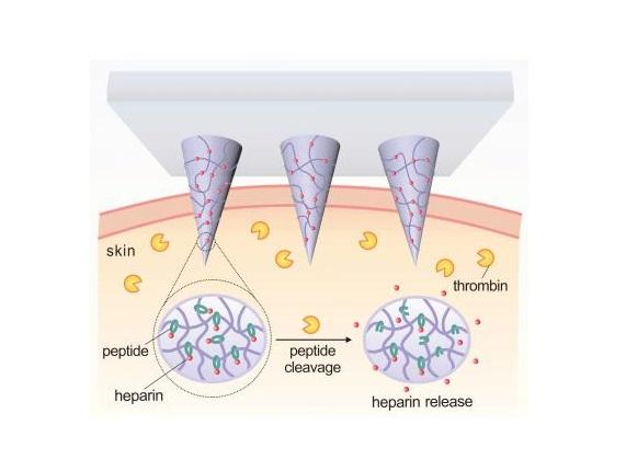 Schematic of thrombin-responsive patch that releases heparin in response to thrombin.  Credit: Yuqi Zhang.