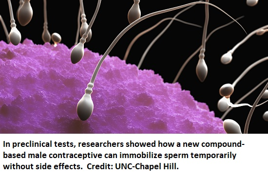 Male Contraceptive Compound Stops Sperm Without Affecting Hormones - healthinnovations