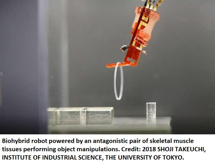 biohybrid robot healthinnovations