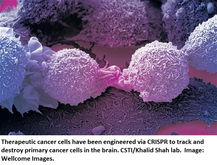 Engineered cancer cells healthinnovations twitter