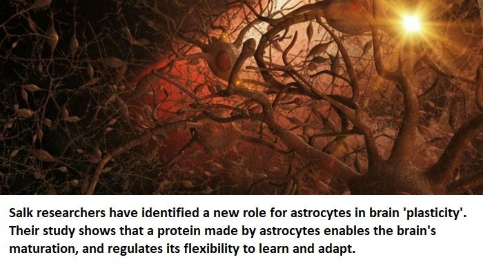astrocytes new role neuroinnovations healthinnovations neuroscience