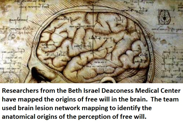 brain free will neuroinnovations healthinnovations science neuroscience health