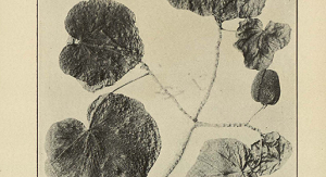 ft-jurrasic-world-synthetic-biology-perfume-healthinnovations-extinct-flower