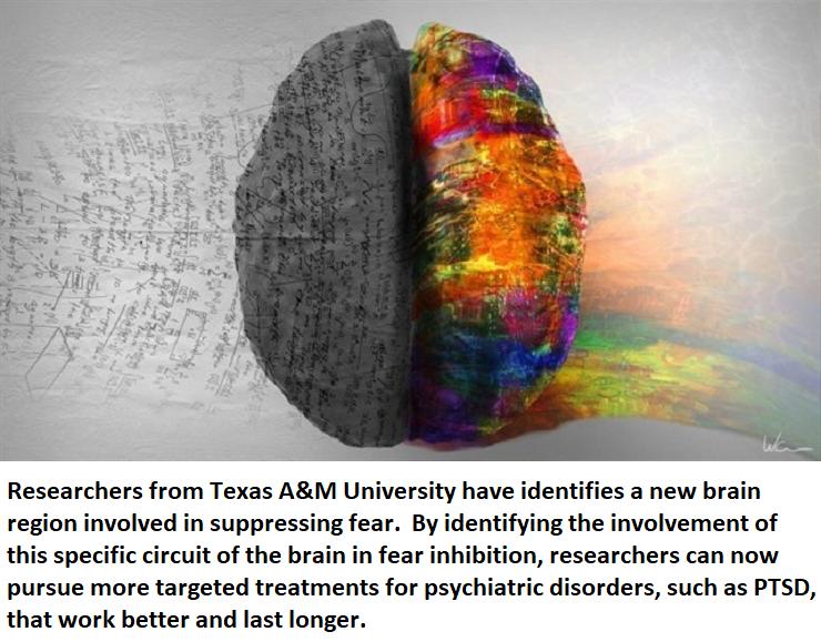 healthinnovations neuroinnovations neuroscience science health ptsd